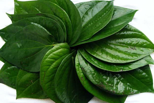 betal leaf