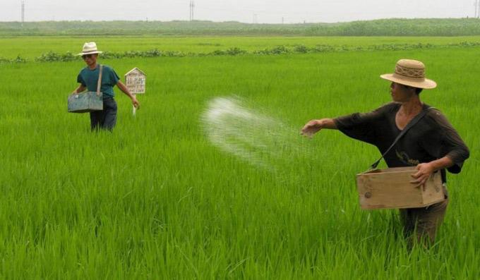 Korean Agriculture practise
