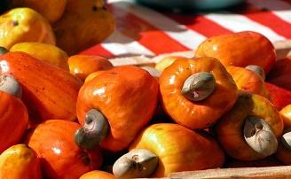 cashew apple fruit