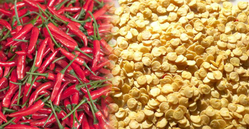 red chilly seed collection